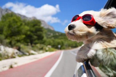 meilleure protection pare-chien filet grille séparation comparatif guide d'achat